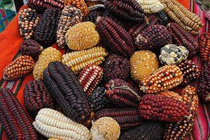 corn-and-maize-pisac-peru-009